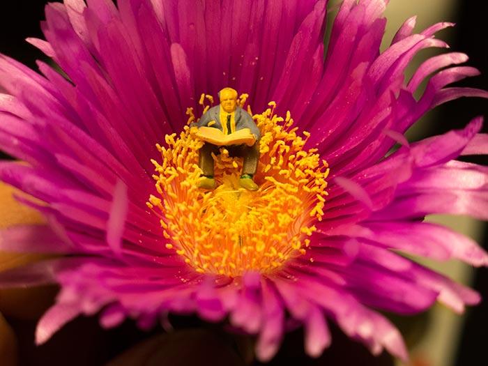 Sitting in a Flower